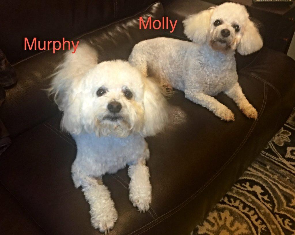 Murphy and Mollya